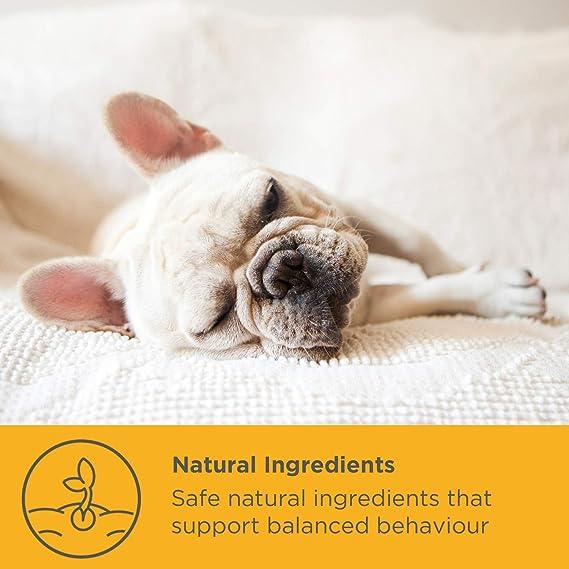 maxxidog - maxxicalm - Ayuda Calmante para Perros - Alivia el Estrés y la Ansiedad - Ingredientes Naturales - No somnoliento - 120 Comprimidos: Amazon.es: ...
