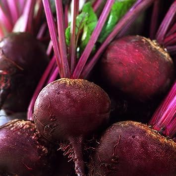 """Remolacha """"Nochowski"""" - variedad productiva con carne de color rojo ..."""