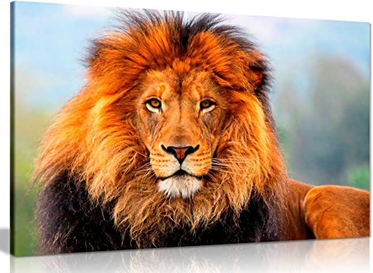 Wild African Lion Canvas Wall Art Picture Print 36x24in
