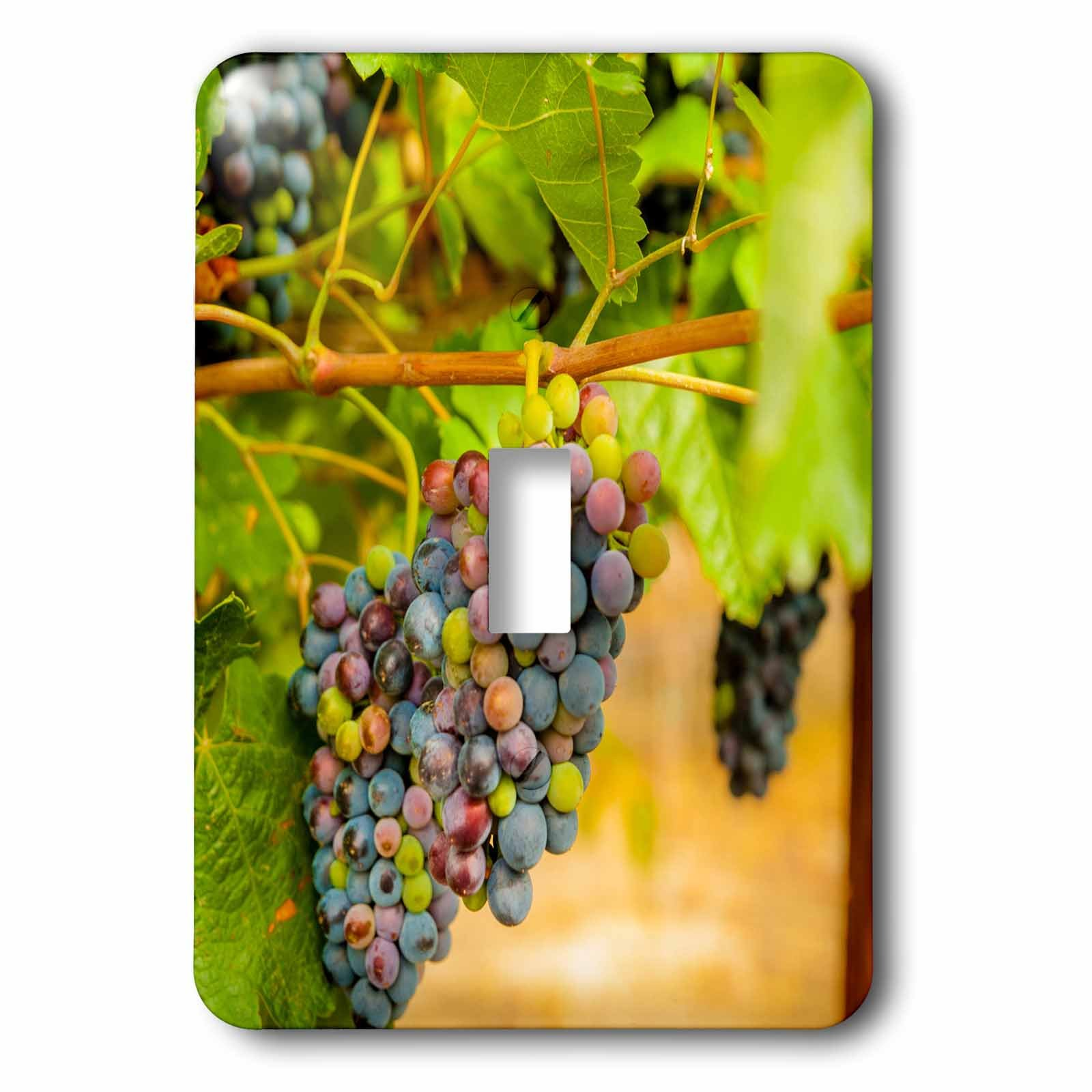 3dRose Danita Delimont - Vineyards - Usa, Washington State, Yakima Valley. Syrah grapes. - Light Switch Covers - single toggle switch (lsp_260521_1)
