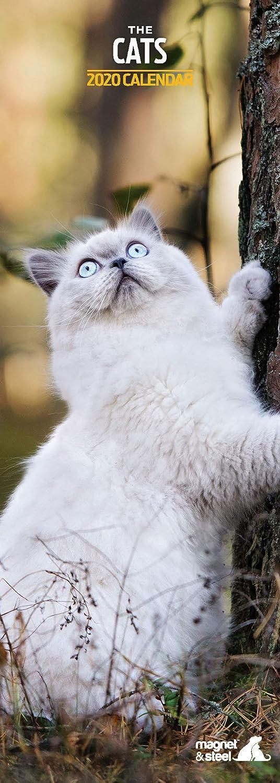 Cats Slim 2020 Calendar