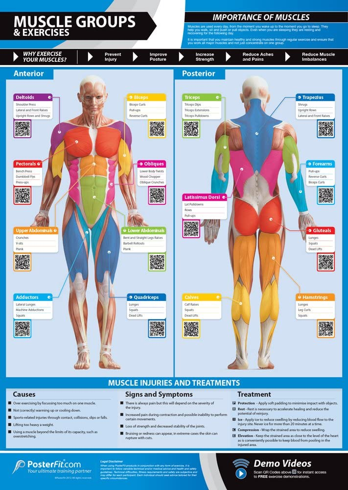"Muscle Groups & Exercises Gym Poster | Anterior & Posterior Muscles & Exercises | Laminated Gym & Home Poster | FREE Online Video Training Support | Large Size 33"" X 23.5"" 