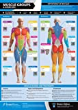 Muscle Groups & Exercises Gym Poster | Anterior & Posterior Muscles & Exercises | Laminated Gym & Home Poster | FREE Online Video Training Support | Size - 594mm x 420mm (A2) | Improves Personal Fitness