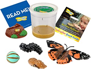 Insect Lore 5 Live Caterpillars Cup of Caterpillars Butterfly Kit Refill - Plus Butterfly Life Cycle Stages Toy Figurines - Shipped Now