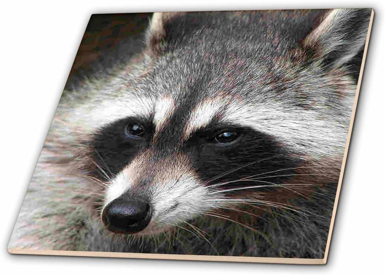 3dRose Two Raccoons Ceramic Tile 4-Inch