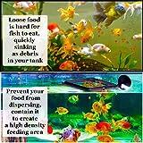 SunGrow Feeding Ring, 4x4 Inches, Floating Food