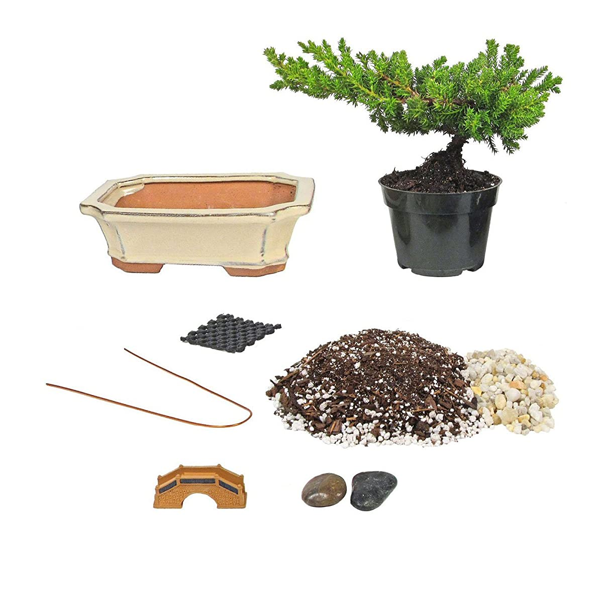 Eves Bonsai Tree Starter Kit, Complete Do-It-Yourself Kit with 6 Year Old Small Japanese Juniper