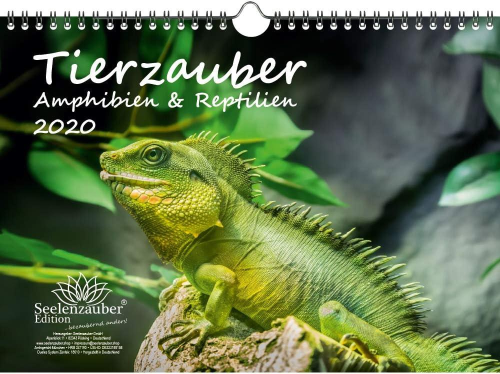 Tierzauber - Calendario 2020, diseño de anfibios y reptiles, DIN A4, incluye 1 tarjeta de felicitación y 1 tarjeta de Navidad: Amazon.es: Oficina y papelería