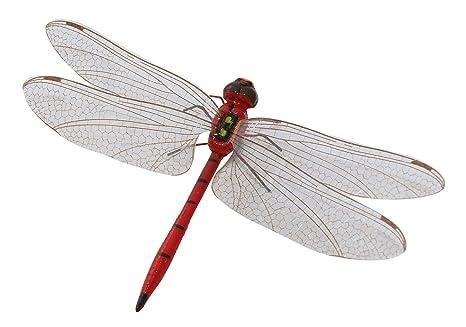 Erro libellula rosso misura media magnetica con magnete