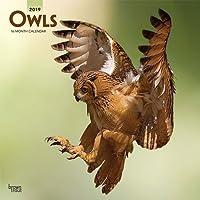 Owls 2019 Calendar