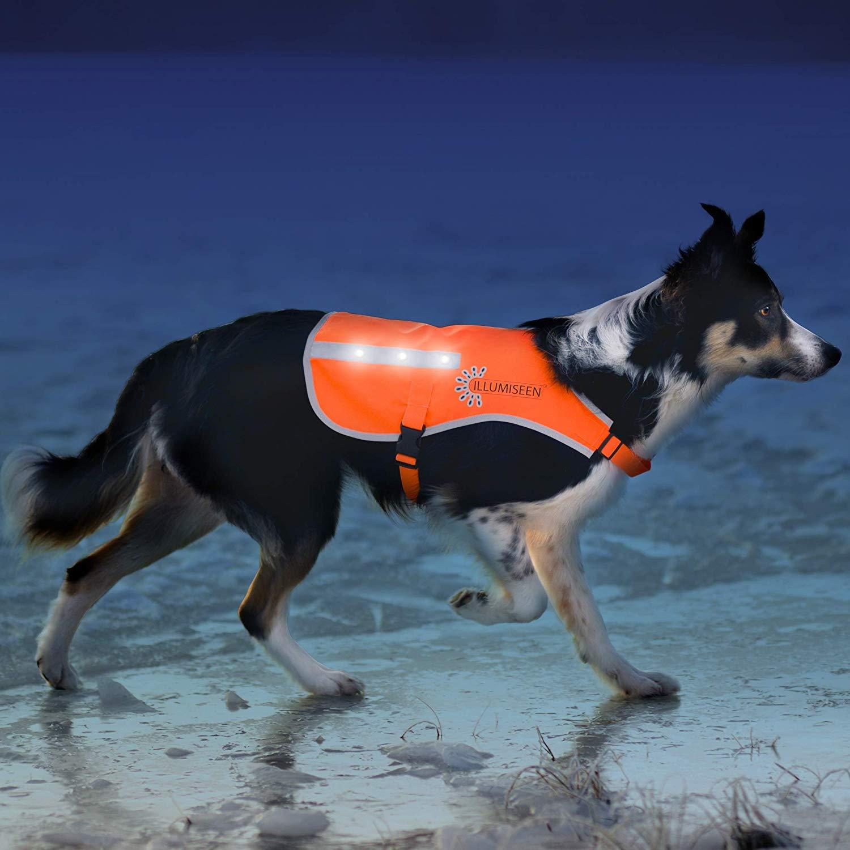 orange Medium orange Medium Illumiseen LED Dog Vest   orange Safety Jacket with Reflective Strips & USB Rechargeable LED Lights   Increase Dog's Visibility When Walking, Running, Training Outdoors (Medium, orange)