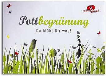 Pottbegrünung Blumensamen – die Pflanzensamen aus dem Pott für den Pott