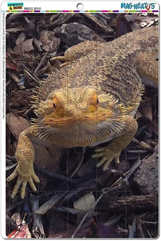Lizard/'s Beard Better than Yours Dragon Button Refrigerator Magnet