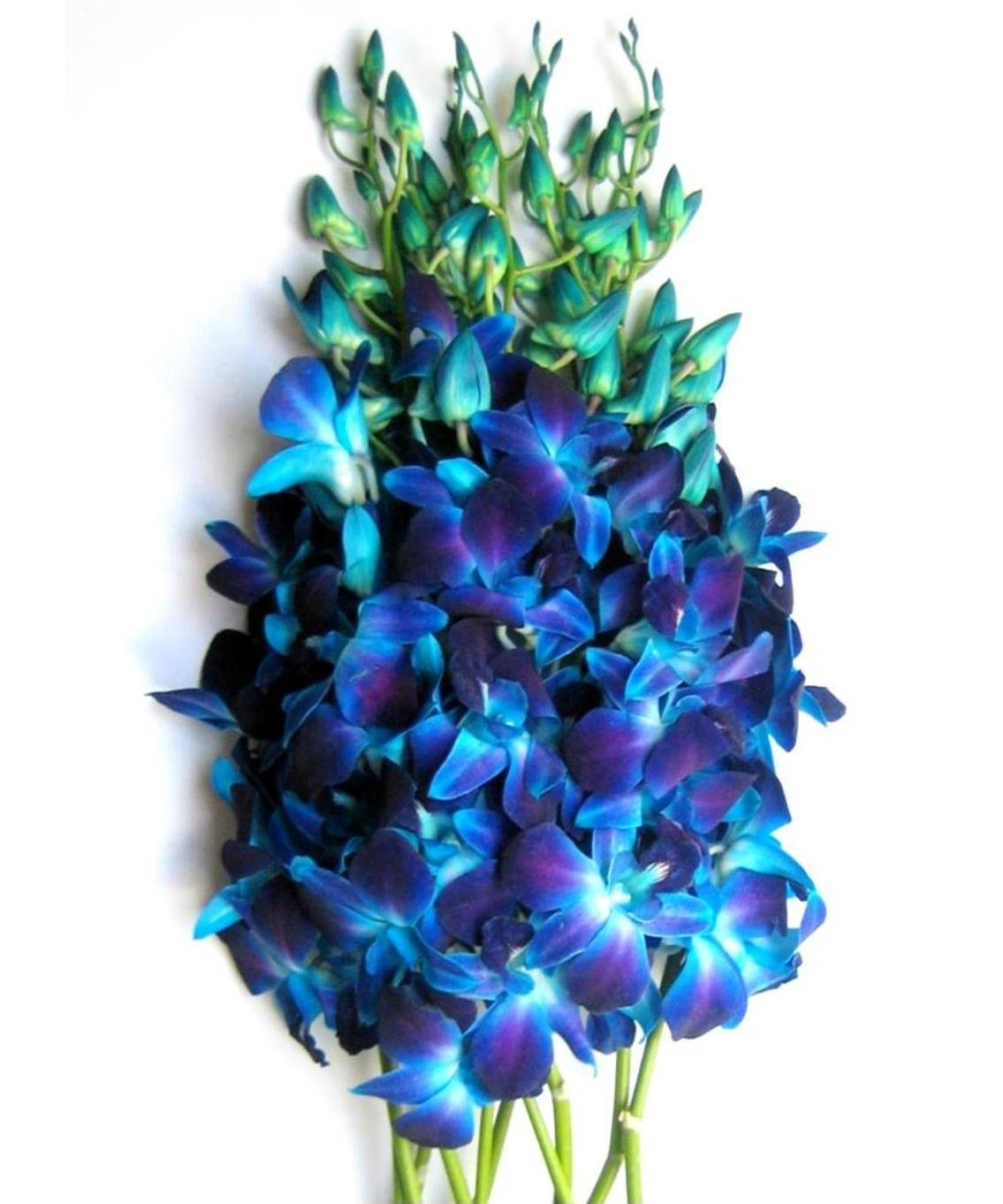 Amazon fresh flowers purple dendrobium orchids fresh cut just orchids fresh blue dendrobium orchids izmirmasajfo