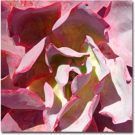 Amazon Com Succulent Square Ii By Amy Vangsgard 18x18 Inch Canvas Wall Art Prints Posters Prints