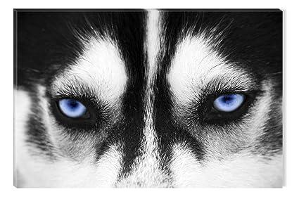 Amazon Com Inspirational Art Black And White Wolf Dog Blue