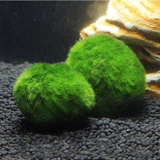 UEETEK Cladophora Aegagropila Moss Ball Plantas acuáticas para pecera o acuario: Amazon.es: Productos para mascotas