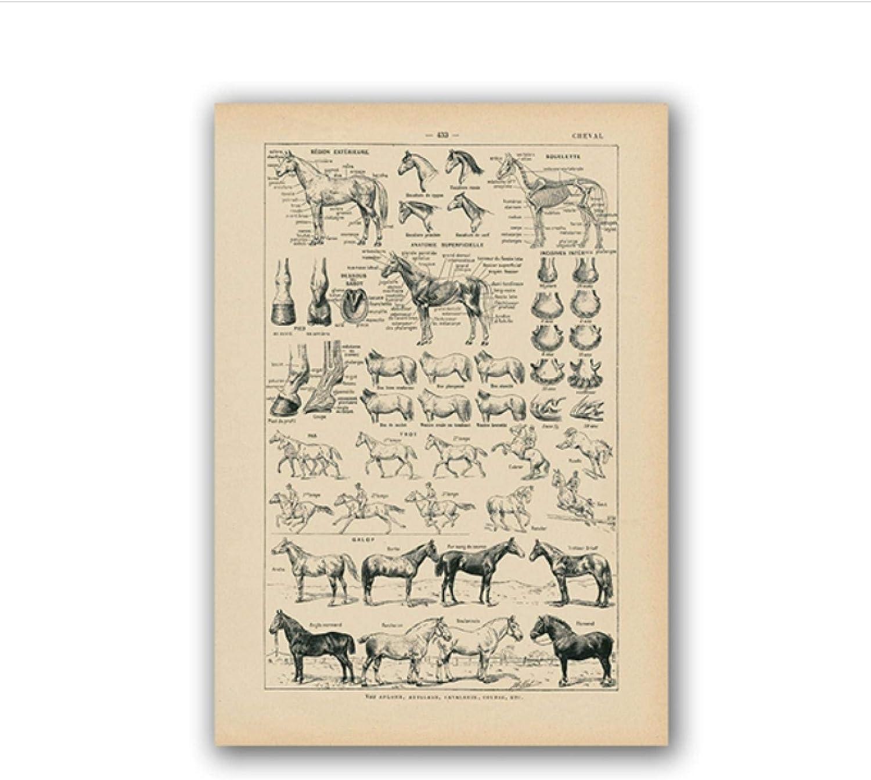 Swarouskll Cuadro de anatomía de caballo francés Vintage impresiones carteles de biología de pared para sala de estar impresiones en lienzo decoración del hogar -20x28 pulgadas sin marco 1 piezas