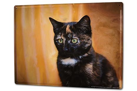 Cartel Letrero de Chapa XXL Raza De Gato Gato doméstico
