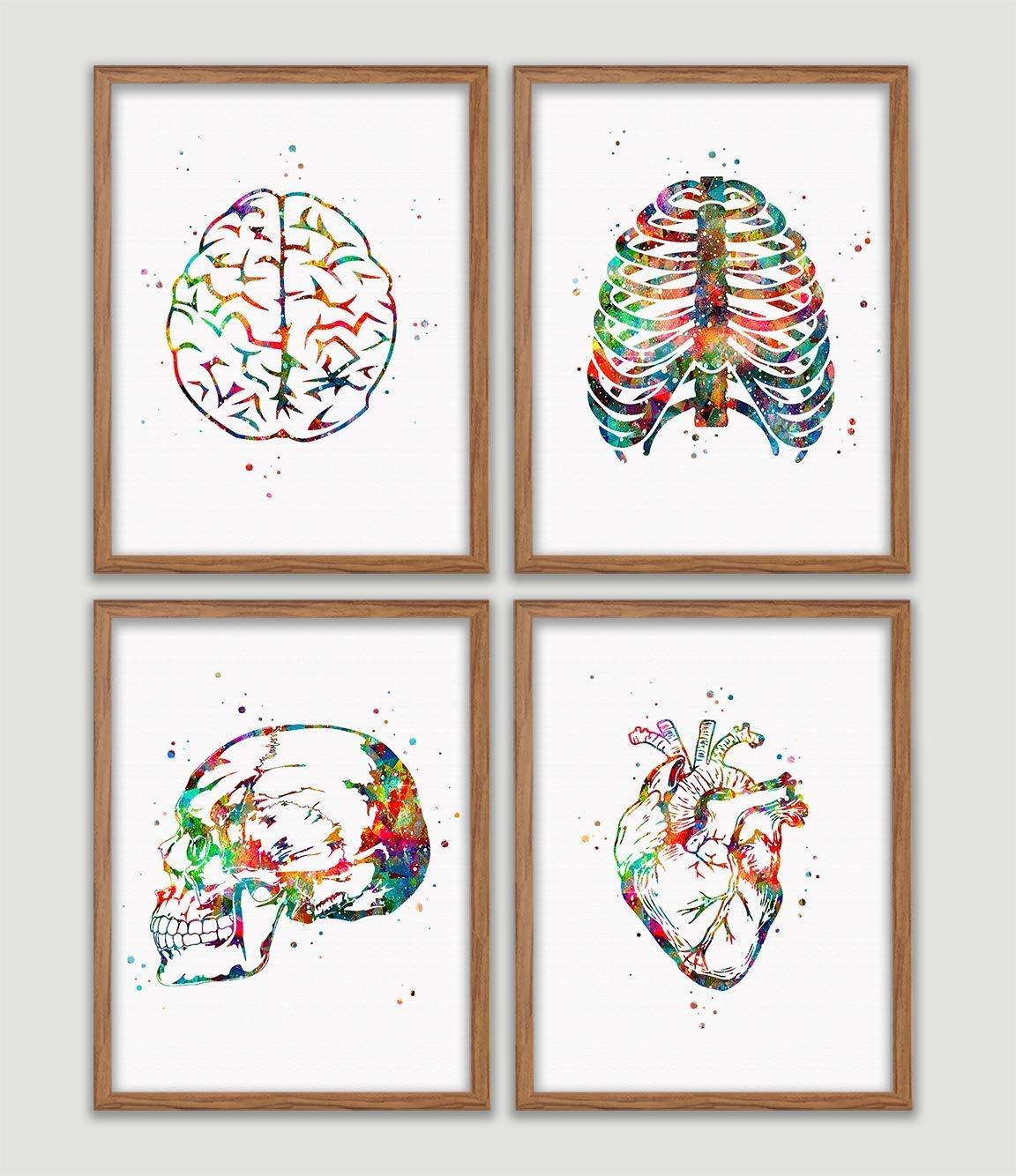 Skeleton Ribcage Watercolor Print Medical Art Medical Art Science Anatomy Art