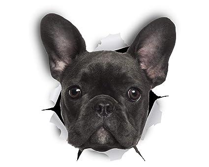 Bagno Degli Ospiti In Francese : Winston bear adesivi da parete cane bulldog francese nero