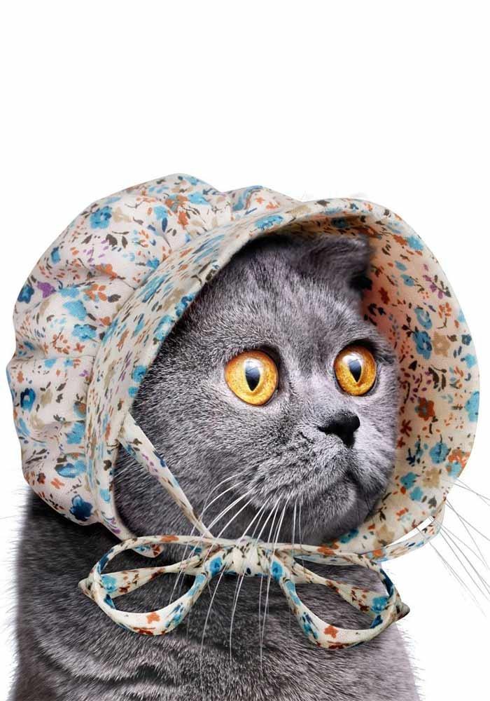 Cat Bonnet - Haube fü r deine Katze Mr.Giggelz