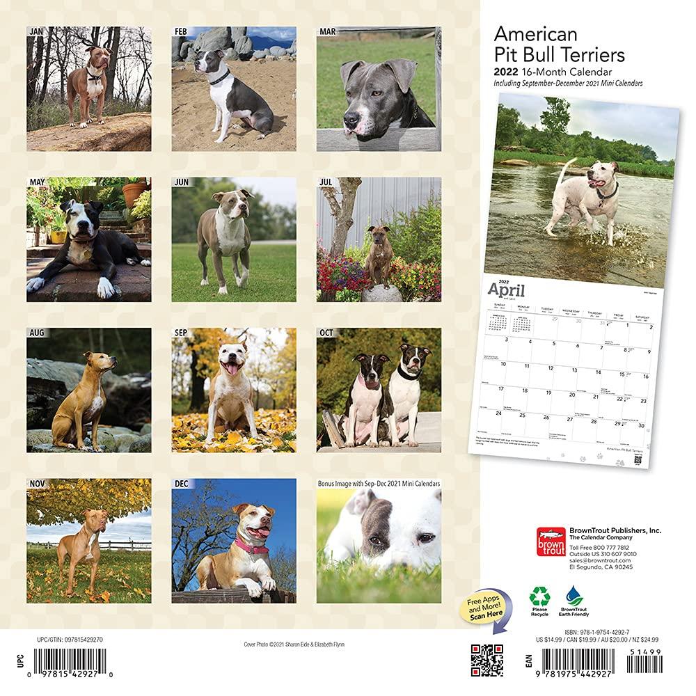 american pit bull terriers 2022 calendar