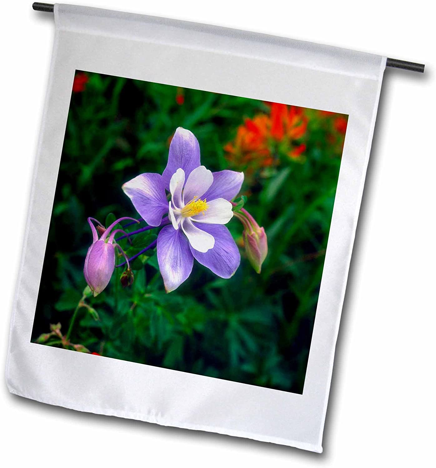 3dRose USA, Colorado, Rocky Mountains, Yankee Boy Basin, Columbine Flower. - Garden Flag, 12 by 18""