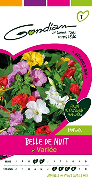 Gondian 164675 Cp 1 Semences Belle De Nuit Variee Multicolore 1 X 8