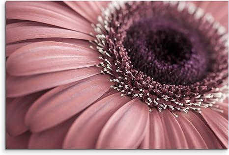 Sinus Art Wandbild 120x80cm Naturfotografie Blumen In Altrosa Auf Leinwand Fur Wohnzimmer Buro Schlafzimmer Ferienwohnung U V M Gestochen Scharf In Top Qualitat Amazon De Kuche Haushalt