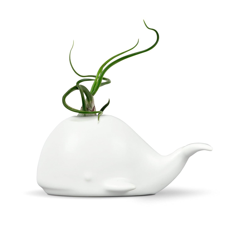 Fred 5229116 Fancy Ceramic Mini Air Plant/Succulent Holder, regular, Whale