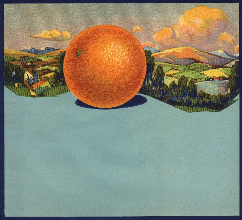 オレンジと果樹園 – Citrusクレートラベル 36 x 54 Giclee Print LANT-57736-36x54 B01M3TEIF4  36 x 54 Giclee Print