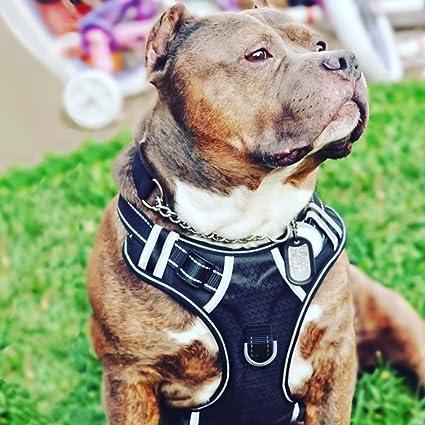 Amazon.com : Big Dog Harness No Pull Adjustable Pet Reflective ...