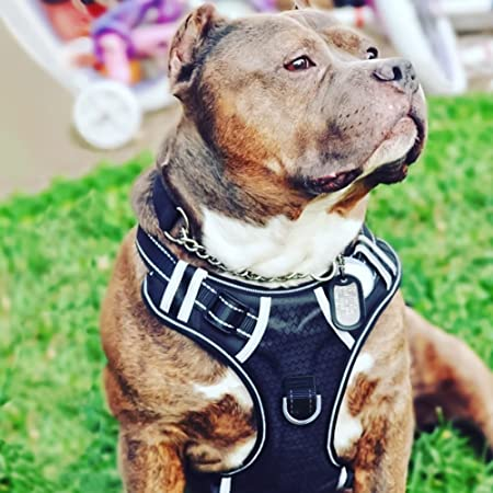 217c38fe302d Amazon.com : Big Dog Harness No Pull Adjustable Pet Reflective Oxford Soft  Vest for Large Dogs Easy Control Harness : Pet Supplies