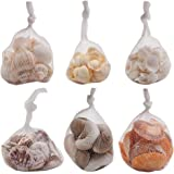 Seashells Mixed Bag of 200 Assorted Piece Bulk Pack For Home Kitchen Offices Indoors and Outdoors Wedding Baby Shower Birthday Summer Beach Nautical Theme Kids Party Favor Craft Supplies Décor