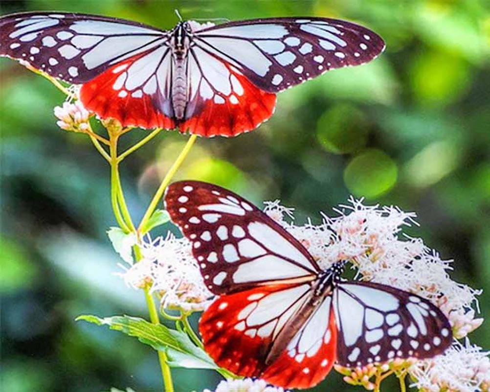 qiulv Schmetterling Diamant Gemälde 5D DIY Stickerei Harz Strass ...