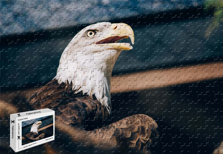 【正規販売店】 pigbangbang、20.6 X 15.1インチ、intellectivゲーム木製ジグソーパズルwith接着剤inボックスギフトwrapping- Bald Eagle Beak Front View Eagle View Beak Eyes – 300ピースジグソーパズル B07FSZP16P, 買取横丁:cff89cb0 --- 4x4.lt