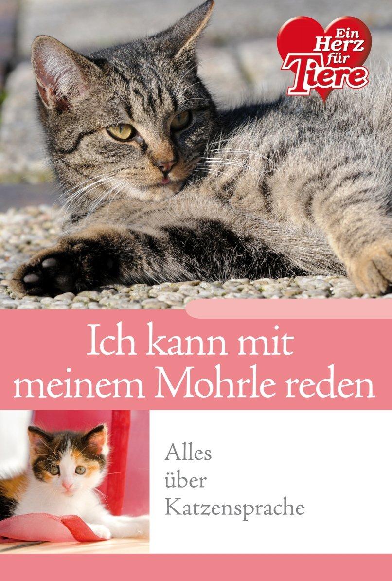 Ratgeber Tiere - 'Ich kann mit meinem Mohrle reden!' - Alles über Katzensprache