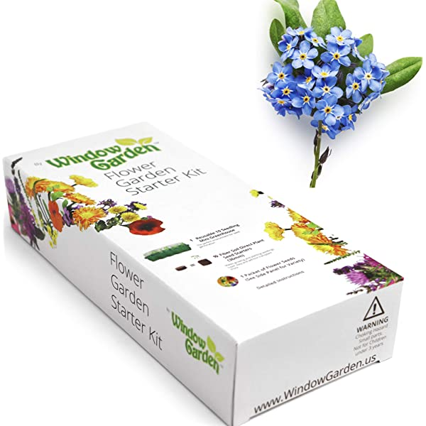 Complete Purple Calla Grow Kit in Unique Holiday Gift Box by TotalGreen Holland Purple Indoor Calla Grow Kit