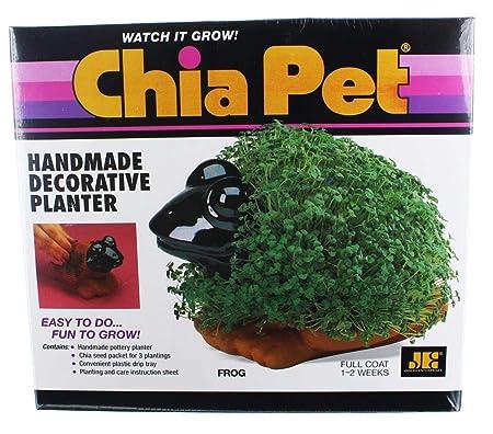Chia Pet - Maceta para césped, diseño de Rana: Amazon.es: Hogar