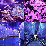 ZHMA 40W UV LED Black Lights, UV Flood Light,Glow