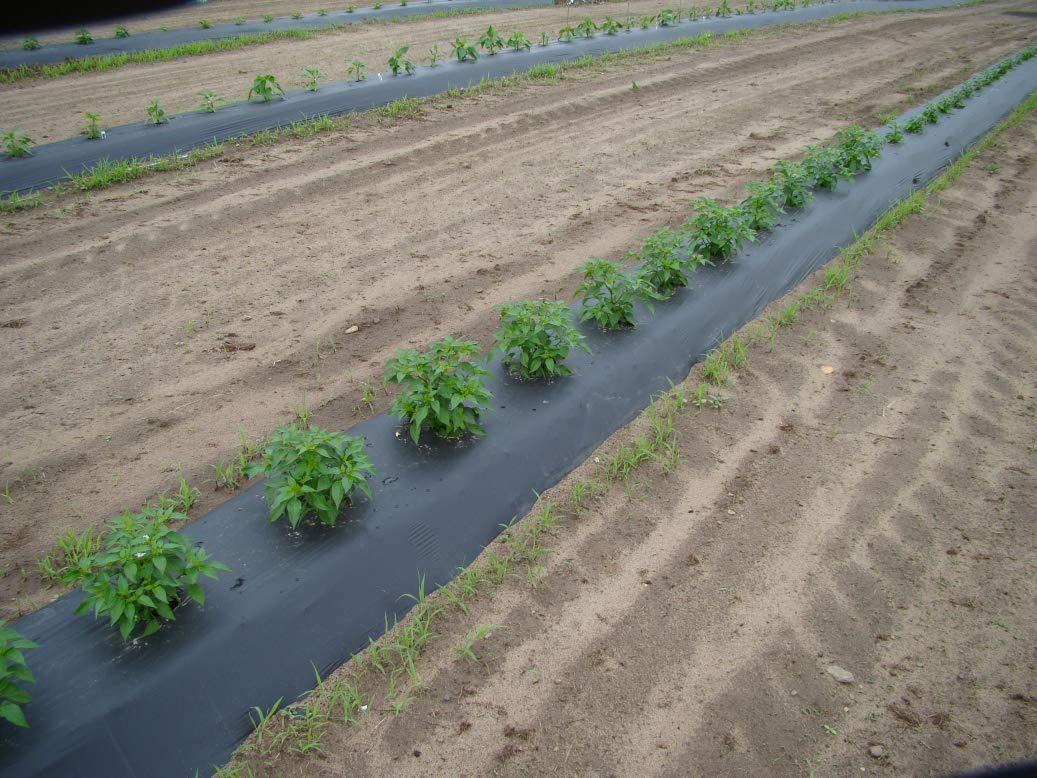 3ft x 2400ft x 1.25mil Black Embossed Plastic Mulch by Pliant