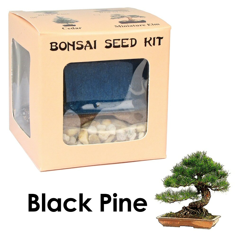 Eve's Black Pine Bonsai Seed Kit, Woody, Complete Kit to Grow Black Pine Bonsai Tree from Seed