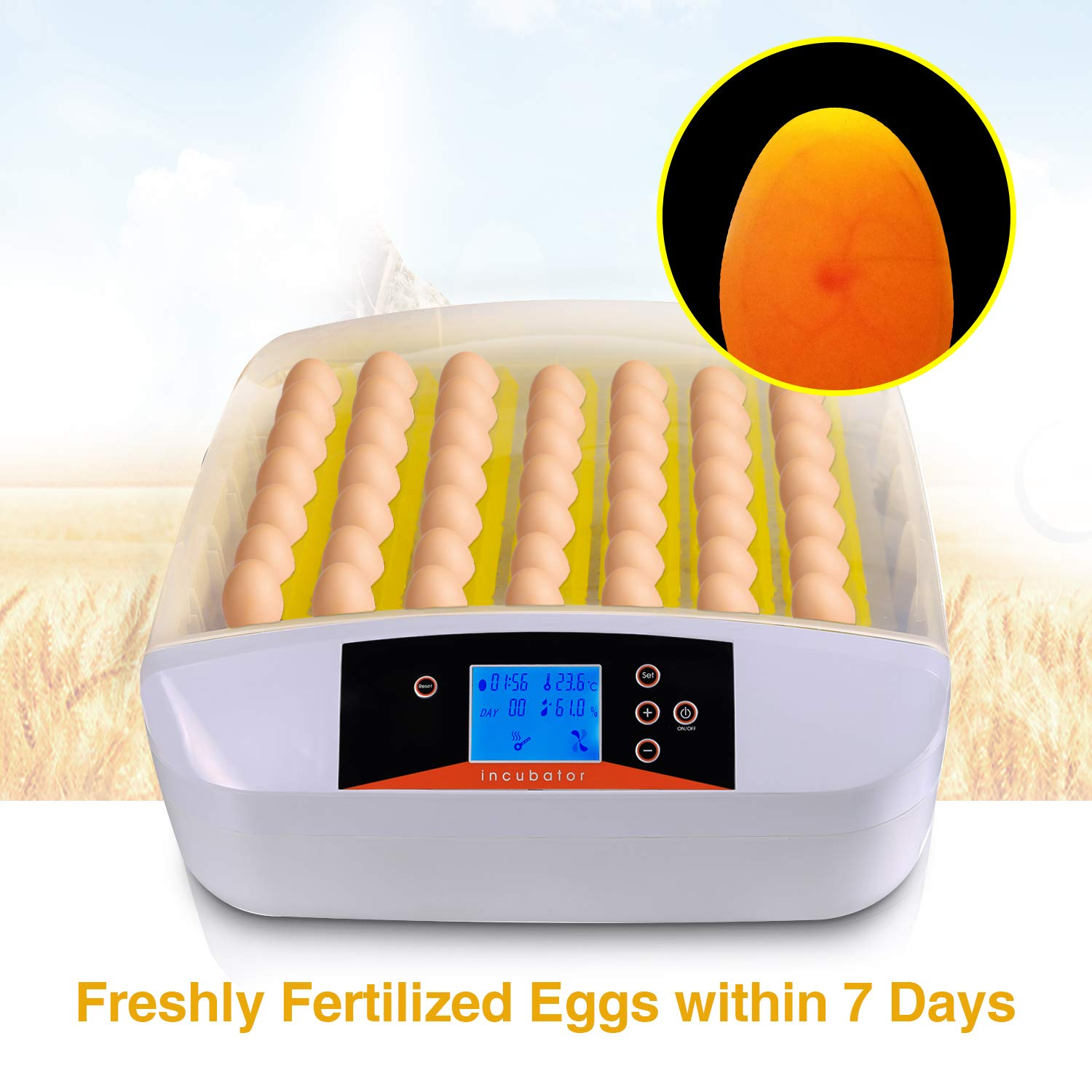 Currens 56 Egg Incubator with Eggs Turner,Digital Automatic Incubators for Hatching Chicken Duck Quail Birds Eggs Poultry Hatcher,Encubadora De Huevos by Currens (Image #5)