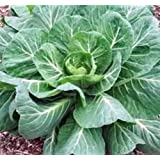 Collard Greens Seeds, Georgia Southern, Heirloom, Organic 100 Seeds, Non Gmo