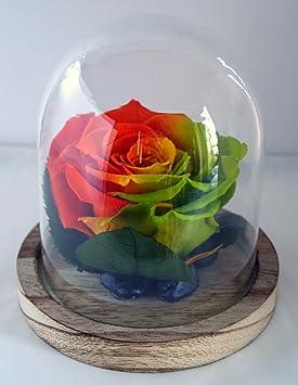 Rose Eternelle Orange Jaune Vert Sous Globe Rose Feuilles De Rose