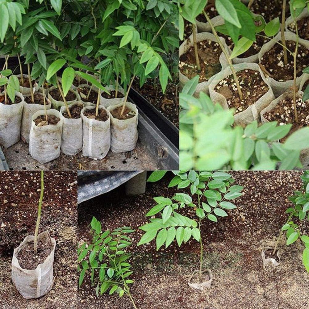 Garden Yard Bonsai Decor strimusimak Dwarf Papaya Fruit Seeds 100 Pcs 100 Pcs Sweet Delicious Plant