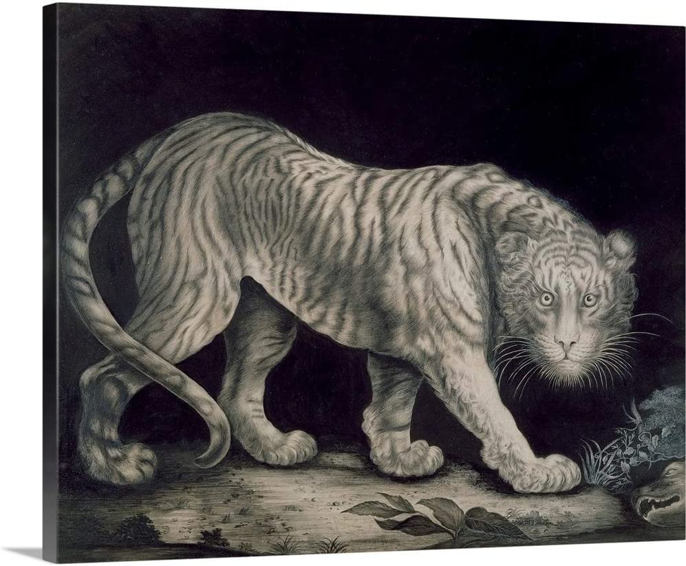Prowling White Tiger Canvas Wall Art Print Large Any Size