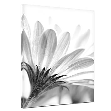 Kunstdruck Blume Schwarz Weiss Bild Auf Leinwand 40x50 Cm
