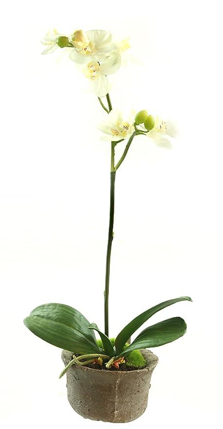 """Gold eagle Estados Unidos planta artificial de orquídeas artificiales cáscara con cemento olla, 20 """""""
